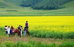 坝上草原-塞罕坝国家森林公园-乌兰布统草原5日游