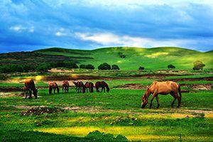 坝上草原-塞罕坝国家森林公园-塞罕坝穿越草原2日游