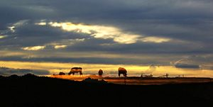 坝上草原-塞罕坝国家森林公园-塞罕坝穿越草原3日游