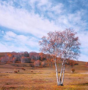 坝上草原-塞罕坝国家森林公园-御道口穿越草原2日游